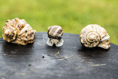 Snail and shells Stock Photo
