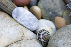 Snail shells and pebbles Royalty Free Stock Photo