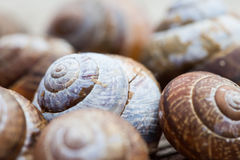 Snail shells selective focus photo Stock Photo