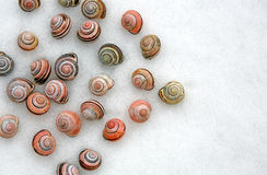Snail shells on snow Royalty Free Stock Images
