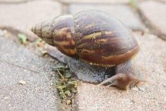Snail on sidewalk Stock Photos