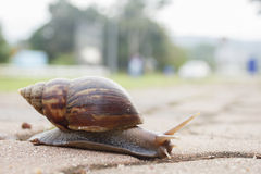 Snail on sidewalk Royalty Free Stock Photography