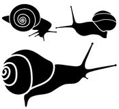 Snail signs. Royalty Free Stock Photo