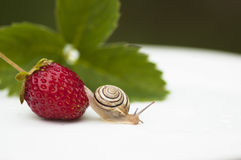 The snail sits on a Berries. The snail sits on a Strawberry Stock Photo