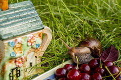 Snail sitting in  the kettle and berries. Snail sitting in the garden next to the kettle and berries Stock Photography