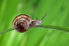 Snail sitting on the leaf Stock Images