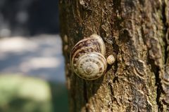 Snail sitting on a tree on a Sunny summer day stock photos
