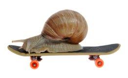 Snail on a skateboard. On the white background royalty free stock photos
