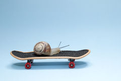 Snail and skateboard Royalty Free Stock Photo