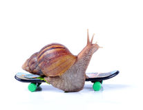 Snail on a skateboard Stock Photos