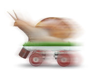 Snail skating motion blur on white background. S stock photography
