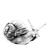 Snail sketch vector graphics. The snail sketch vector graphics, black and white drawing Stock Photos