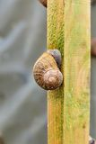 Snail sleeping on the farm Royalty Free Stock Photography
