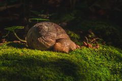 Snail sleeping in the forest stock photos