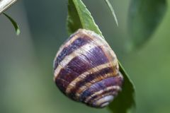 The snail is sleeping on the green twig royalty free stock images