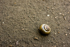 A snail Royalty Free Stock Image