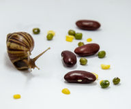 Snail. Slow down on white background Royalty Free Stock Photos
