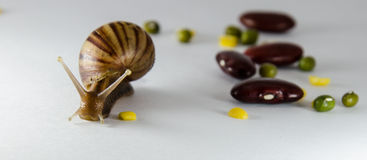 Snail. Slow down on white background Royalty Free Stock Photo