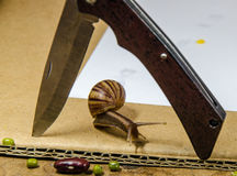 Snail. Slow down on white background stock photography