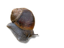 Snail, slow motion Stock Photography
