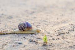 Snail slowly creeping along the sandy road Stock Photos