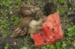 Snail slug slow grass closeup nature ground concept Stock Images