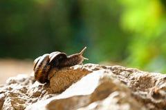 Snail. A small snail  of Abhazia Royalty Free Stock Photos