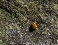 Snail. Small snail on a big rock Stock Photo