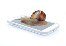 Snail on smart phone on white background. S stock image