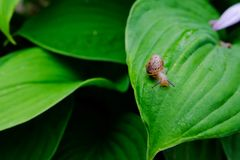 Snail. On a green leaf Stock Images