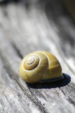 Snail with a snail shell Stock Images