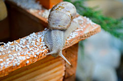 Snail speed Royalty Free Stock Photography