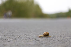 Snail speed Royalty Free Stock Photo