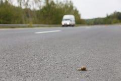 Snail speed Stock Photos