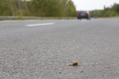 Snail speed Royalty Free Stock Images