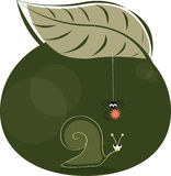 Snail and spider Royalty Free Stock Photography