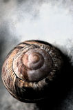 Snail spiral shell Royalty Free Stock Photo