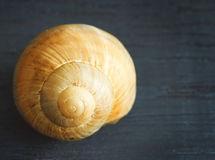 Snail spiral shell on wooden background. Royalty Free Stock Images
