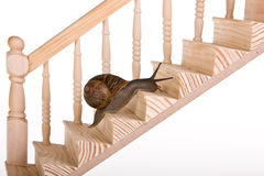 Snail on stairs stock photos