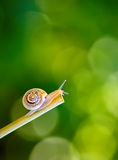 Snail on stick Stock Image