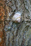 Snail sticks on tree bark Stock Photos
