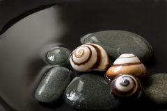 Snail still life Stock Photos
