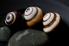 Snail still life Royalty Free Stock Photos