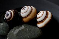 Snail still life Royalty Free Stock Photos