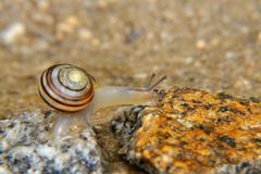 Snail on the stone Royalty Free Stock Photo