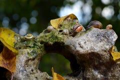 Snail stone Stock Image