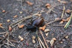 Snail on a stone Stock Photo