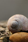 Snail and stone. Macro image of a brown snail shell on a small stone Stock Photos