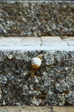 Snail on the stone stairs Royalty Free Stock Image