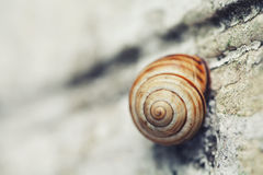 Snail on stone surface macro view. Shallow depth of field, selective focus Royalty Free Stock Images
